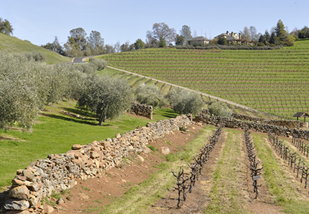 A view from a vineyard with terraced terrior